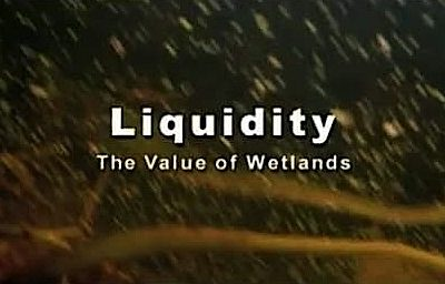 Liquidity: The Value of Wetlands